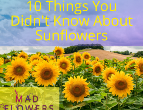 10 Things You Didn't Know About Sunflowers