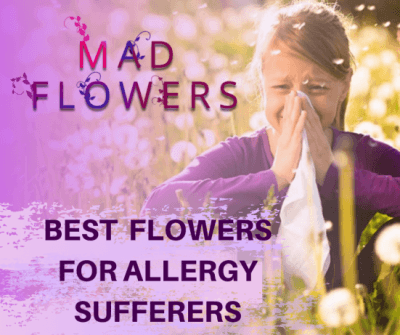 Allergy Sufferers