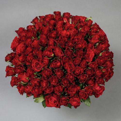 Mad Flowers Roses Valentines