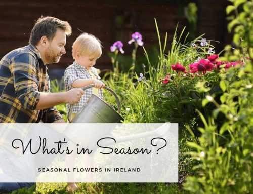 What's in Season? Seasonal Flowers in Ireland