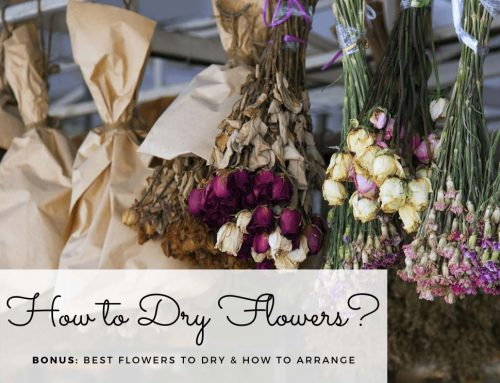How to Dry Flowers: Best Flowers to Dry