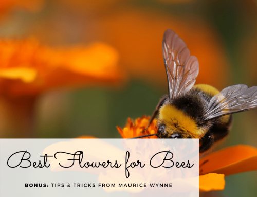 Best Flowers for Bees & Butterflies