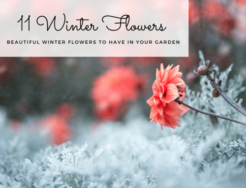 11 Best Winter Flowers