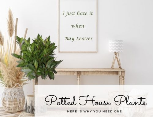 Potted House Plants: Here is why you need one